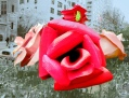 Roses, Park Avenue, NY